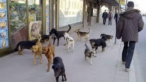 На Плоштад Македонија 71  годишен скопјанец нападнат од кучиња