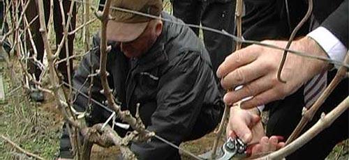 Заев и Николовски на закројување на лозја во Тиквешијата