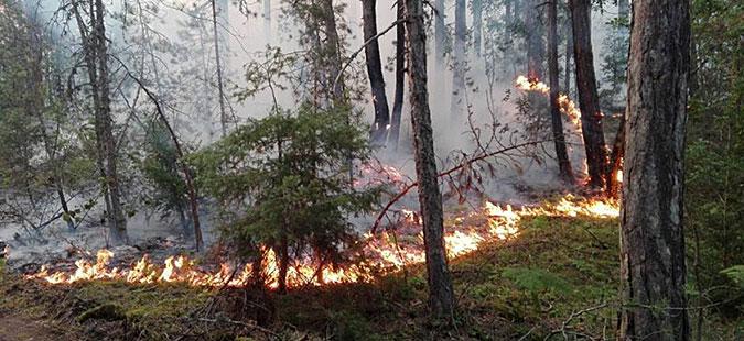 Македонија се уште гори   активни десетина пожари
