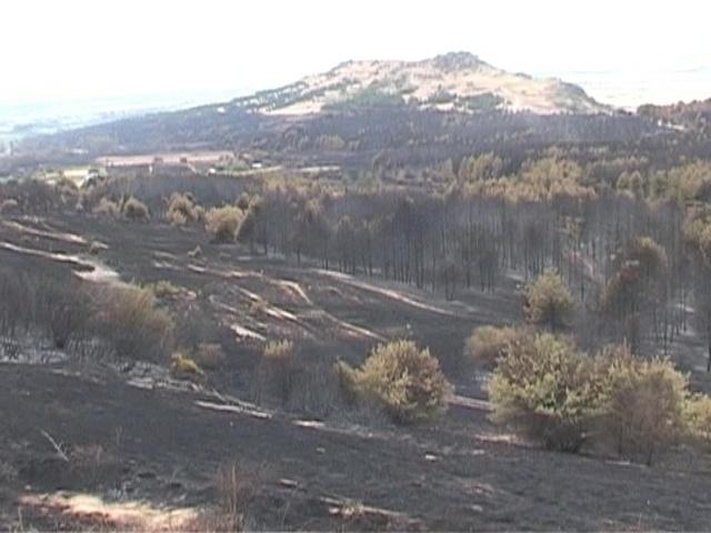 Пожарот во Трескавец по контрола  огнените јазици далеку од манастирот