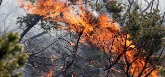 Пожарот кај Трескавец повторно е активен