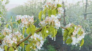 Николовски  Наскоро исплата на штетите од пролетните мразови во 2016  И 2017 година