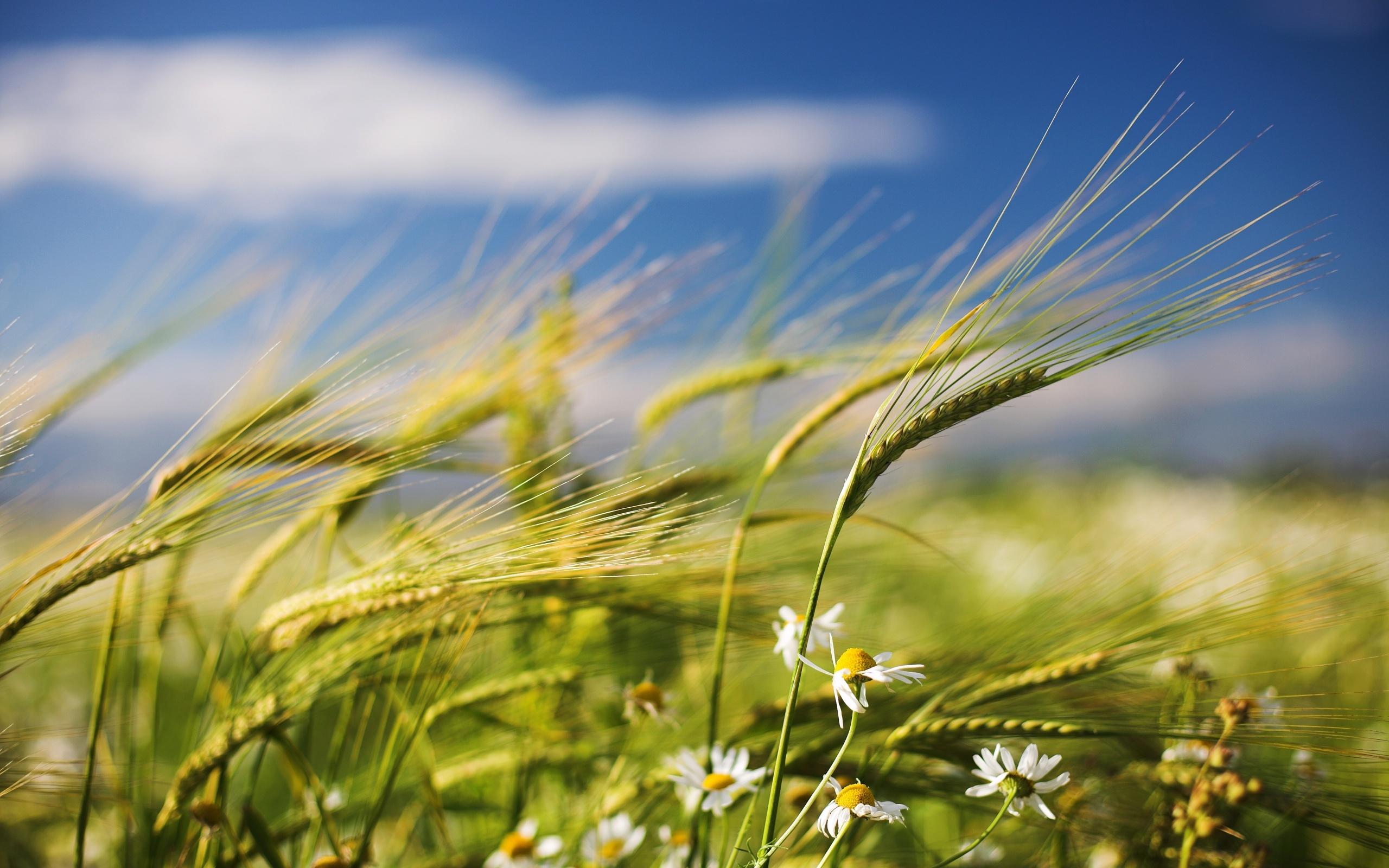 Времето утре во Македонија ќе биде променливо облачно со засилен северен ветер и значително посвежо
