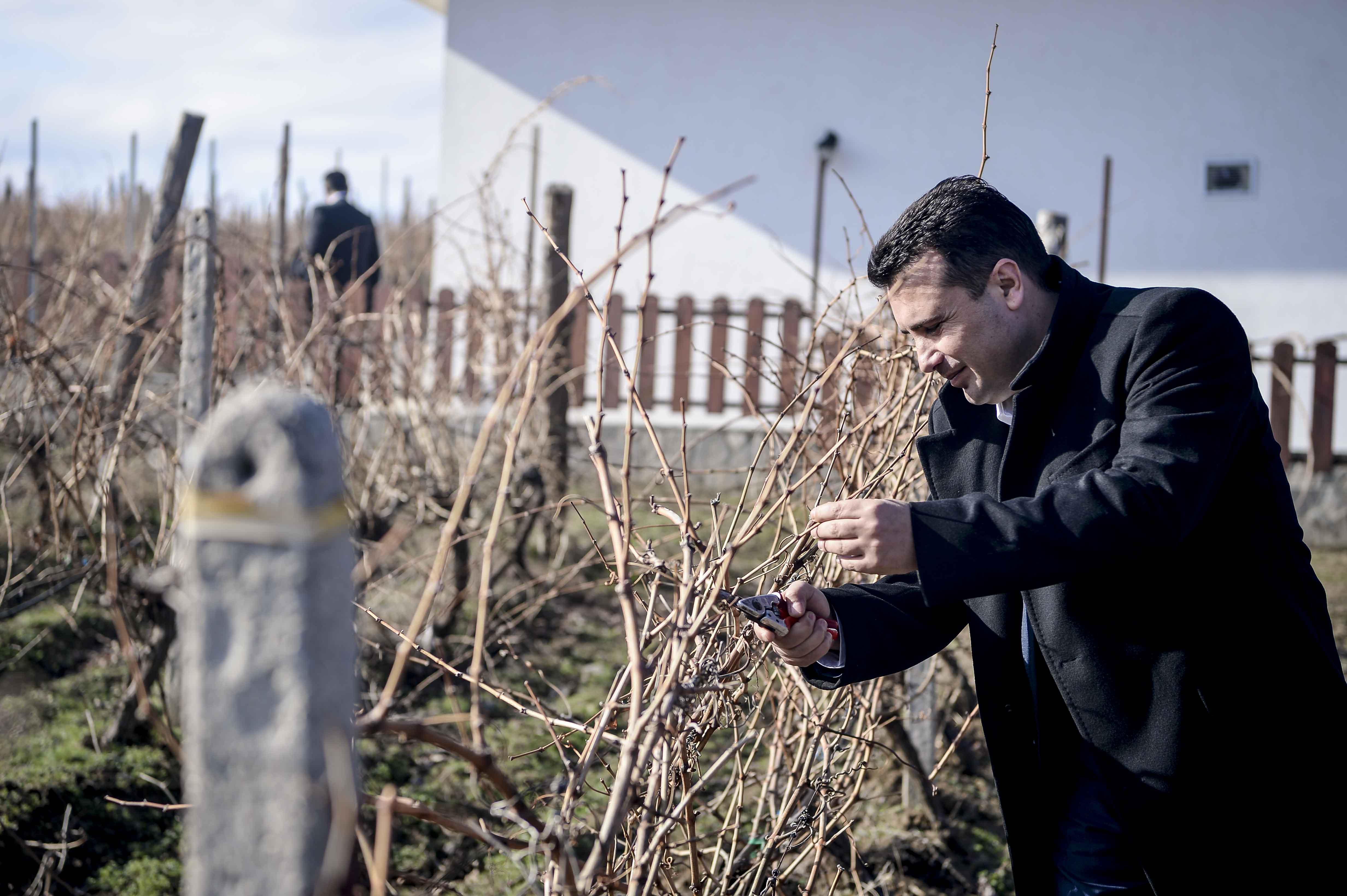Премиерот Заев ги закрои лозјата во Тиквешијата според традиционалниот обичај
